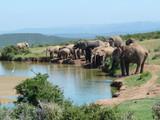Słonie przy wodopoju na safari