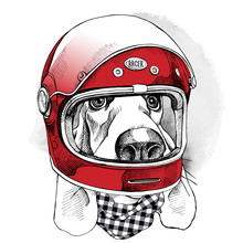 The Image Of The Dog Racer In The Modern Helmet. Vector Illustration.