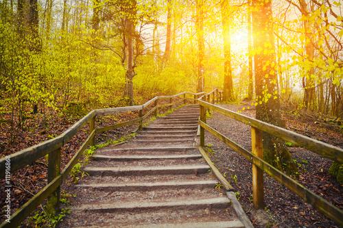 Photo Stands Road in forest Beautiful Sunrise In Spring Forest Near Zurich, Switzerland
