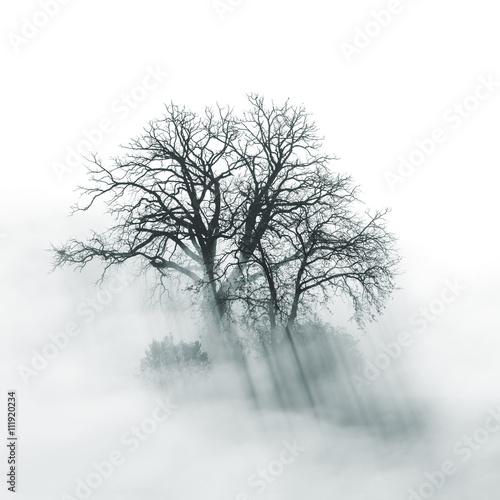 Naklejka premium Lone Tree sylwetka w mglisty poranek