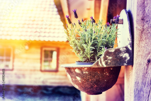 Photo  Home decoration with lavender flower pot