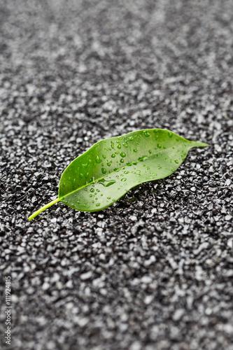 zielony-lisc-z-kroplami-wody-na-zwirowej-powierzchni