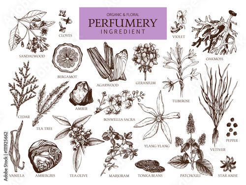Fototapeta Vector collection of hand drawn perfumery materials and ingredients. Vintage set of aromatic plants for perfumes and cosmetics. obraz