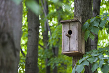 Nesting Box Or Birfhouse On The Tree In The Park