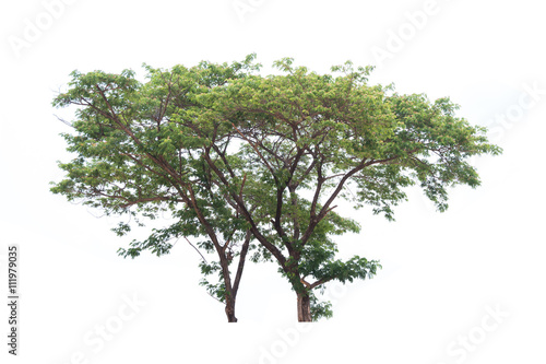 Fotografija  tree isolated on white background