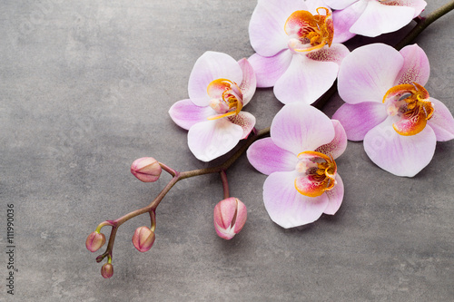 Fototapeta Spa orchid theme objects on grey background. obraz
