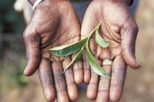 SRI LANKA NUWARA ELIYA TEA PLANTATION