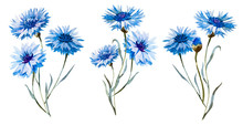 Cornflower Watercolor Set