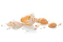 Closeup Of Seashells.