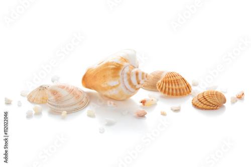 Fototapeta Closeup of seashells. obraz
