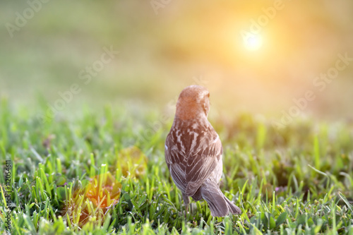 obraz lub plakat bird on grass watching the sun
