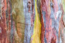 Eucalyptus Skin Texture Background