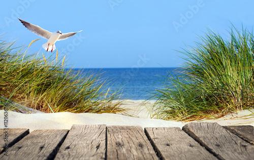 Garden Poster North Sea Ostseestrand mit Holzsteg, Dünen und Möwe
