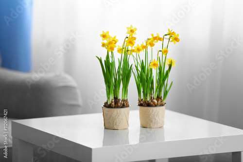 Fotografia Blooming narcissus flowers on table indoors
