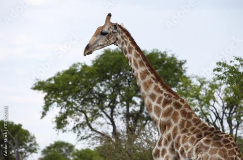 Fotografie, Obraz  animals' wildlife in Namibia, Africa