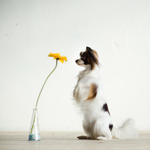 Dog Is Watching On Flower