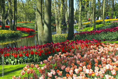 Photo  Multicolored tulips in spring, Netherlands