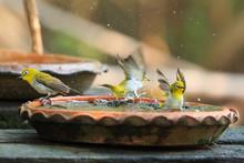 Cute Birds Bathe In A Small Pot