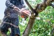 Leinwanddruck Bild - man uses chainsaw cut the tree