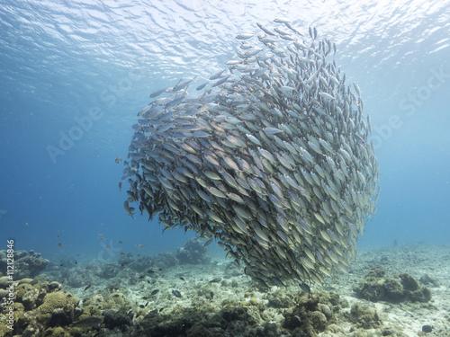 Photo sur Toile Sous-marin Unterwasser - Riff - Fisch - Schwarm - Tauchen - Curacao - Karibik