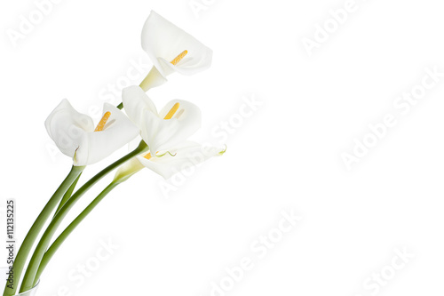 Photo white calla lilies