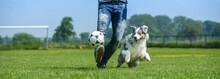 Hund Und Herrchen Spielen Zusa...