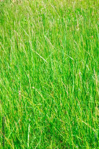 tall grass texture. Tall Grass Texture Nature Background