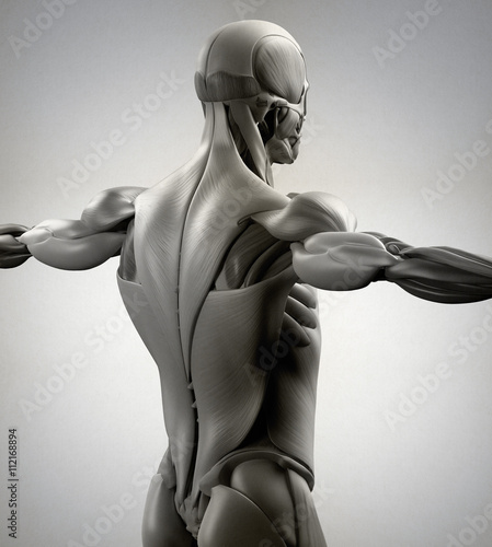 Human Anatomy Muscle Groups Muscle Layout And Location Shown In