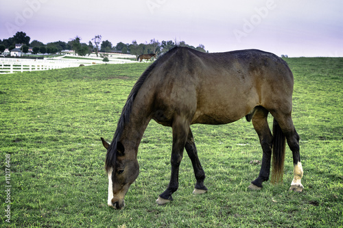Horse grazing Canvas-taulu