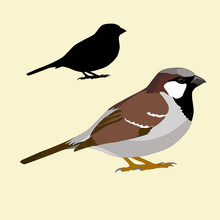 Sparrow Bird Silhouette Black Realistic Vector Illustration