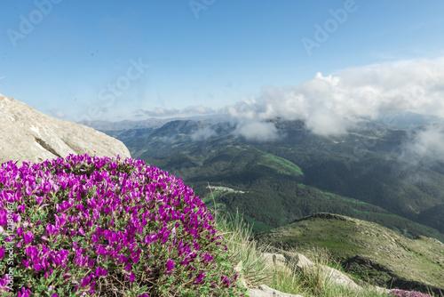 zirve çiçekleri ve büyüleyici manzara Poster
