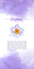 Narcissus Watercolor Vector Il...