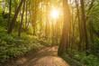 leuchtende Sonnenstahlen im Wald