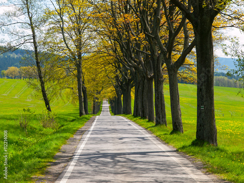 Poster Smal steegje Narrow road on sunny day