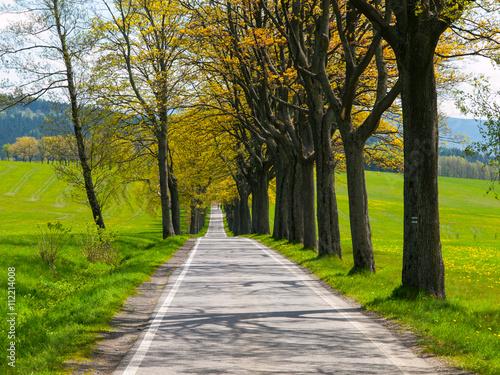Fototapeten Schmale Gasse Narrow road on sunny day