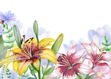 Watercolor Floral Image With Lily, Crocus And Chicory Flowers