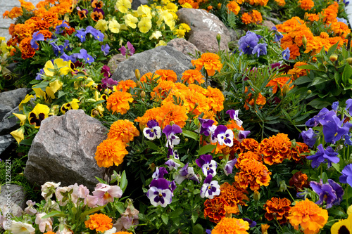 Papiers peints Pansies Decorative flower bed with stones. Landscaping