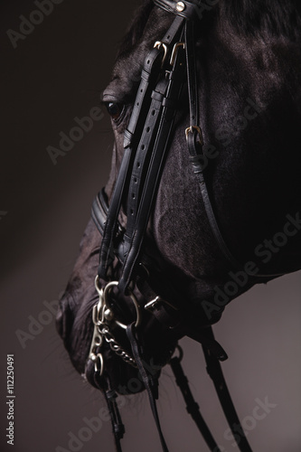 Black horse head with equipment closeup