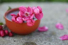 Hibiscus Tea In Ceramic Cup Is...