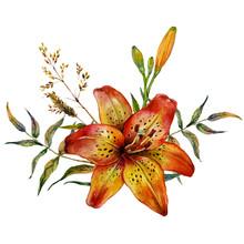 Watercolor Tiger Lily