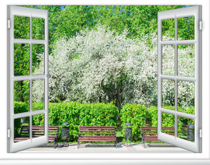 Fototapeta view window flowering tree