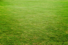 Green Meadow, Grass Field For Football,grass Texture For Backgro