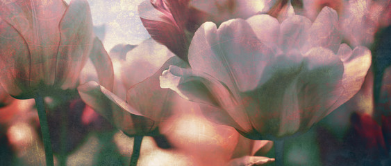 Fototapeta Prezenty ślubne tinted tulips texture concept