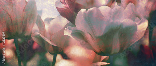 tinted tulips texture concept - 112327609
