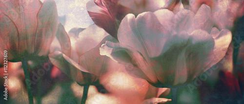 Foto-Duschvorhang - tinted tulips texture concept