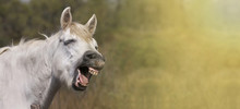 Website Banner Of A Funny Laughing Horse
