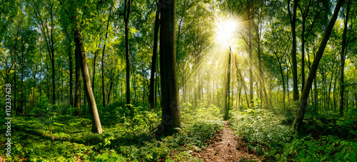 Photo Stands Road in forest Weg im Wald beleuchtet von goldenen Sonnenstrahlen