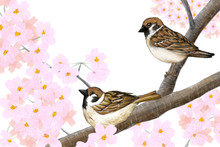 Original Artwork Of Eurasian Tree Sparrows And Beautiful Pink Cherry Blossoms