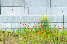 Industrial Poppies