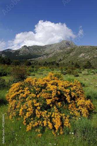 Fotografie, Obraz  Primavera en la montaña